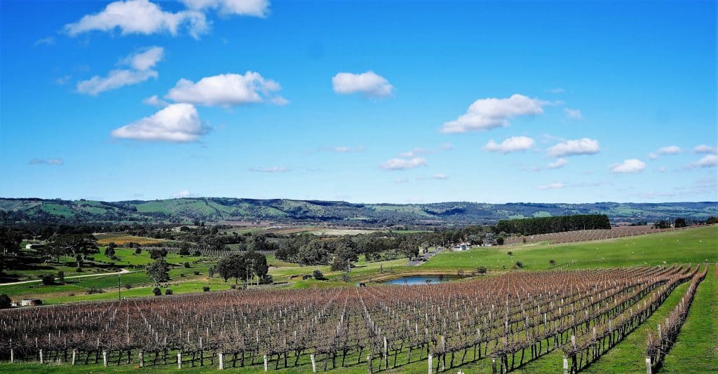 buy blewitt springs wines online