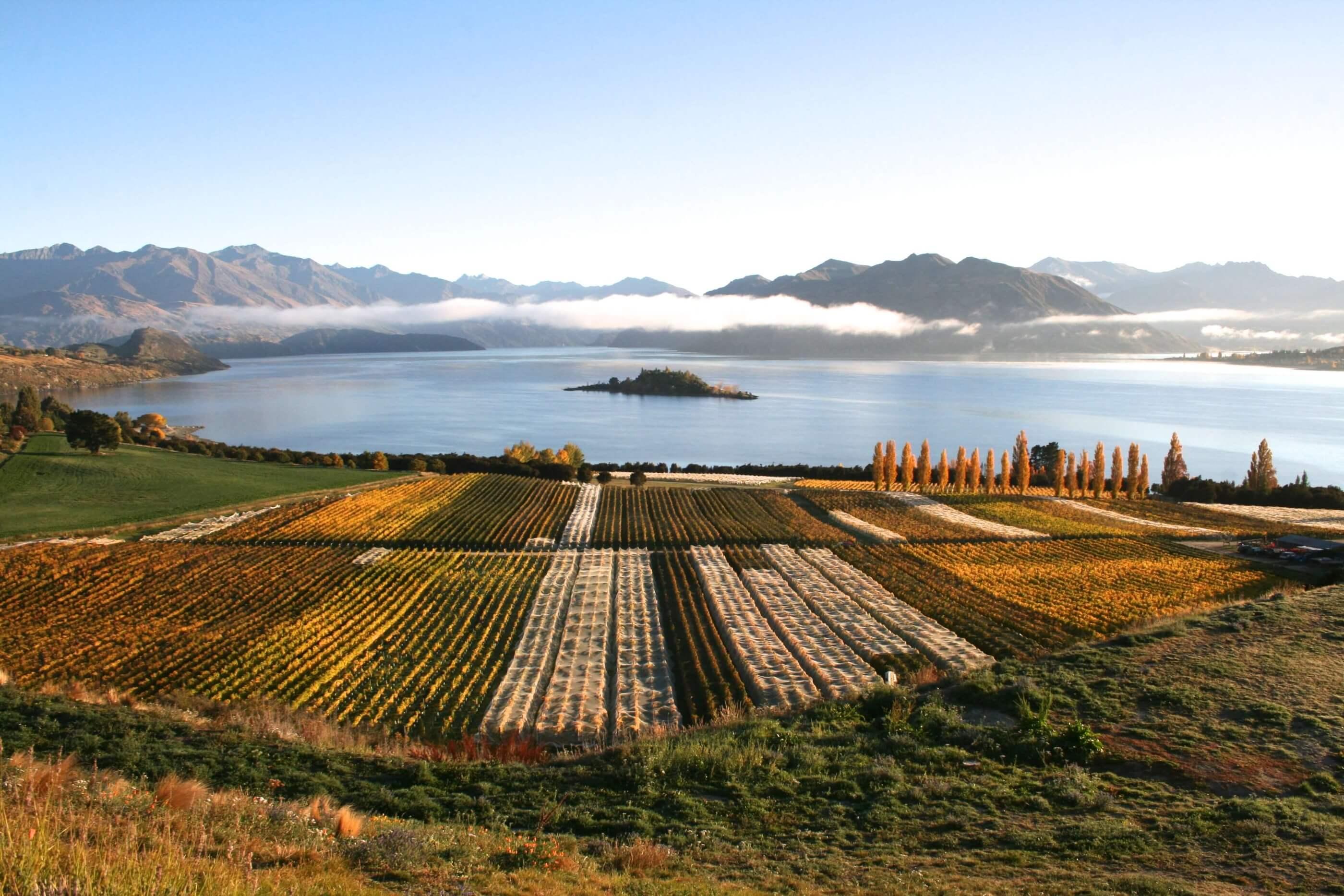Rippon NZ Wines